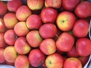 яблоки красные  из Польши калибра 7+